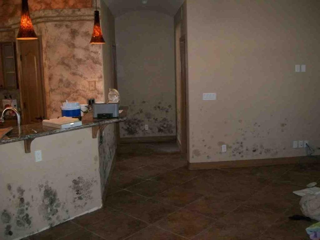Mold abatement in Nevada (11)