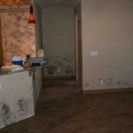 Mold abatement in Nevada (11)