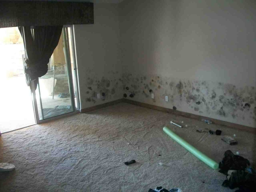 Mold abatement in Nevada (12)