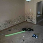 Mold abatement in Nevada (13)