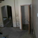 Mold abatement in Nevada (14)