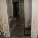 Mold abatement in Nevada (15)