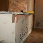 Mold abatement in Nevada (22)