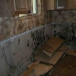 Mold abatement in Nevada (23)