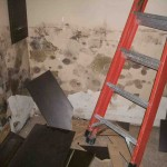Mold abatement in Nevada (24)