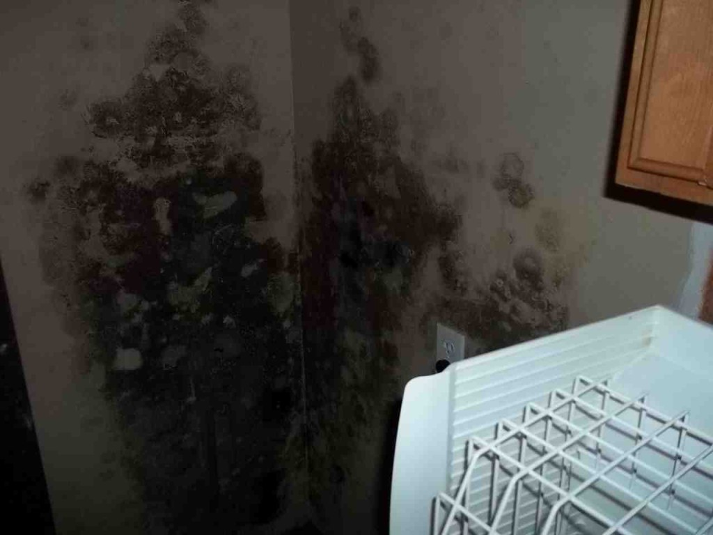 Mold abatement in Nevada (27)
