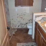 Mold abatement in Nevada (29)