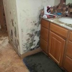 Mold abatement in Nevada (31)