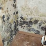 Mold abatement in Nevada (32)