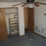 Mold abatement in Nevada (8)
